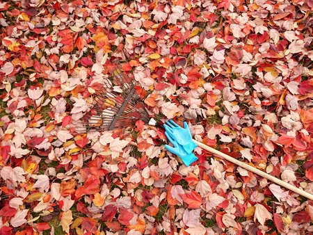 Colorful Autumn  leaves with fan rake and gloves on lawn 写真素材