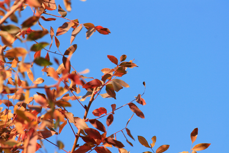 Bright, Close-up, Red Leaf, Blue Sky Stock Photo