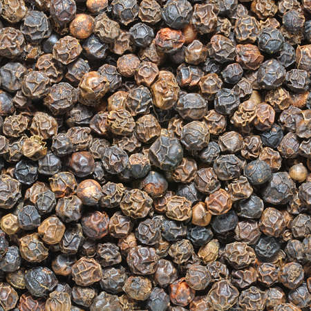 black pepper: Black peppercorn Stock Photo