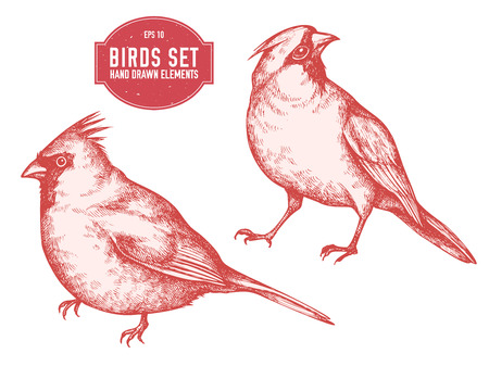 Vector collection of hand drawn pastel cardinal stock illustration Иллюстрация