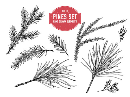 Vector collection of hand drawn black and white pine branch, spruce, redwood stock illustration Illustration