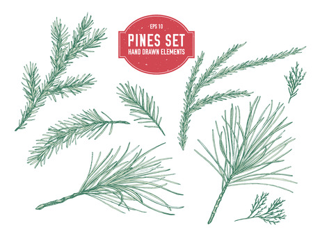 Vector collection of hand drawn pastel pine branch, spruce, redwood stock illustration Illustration