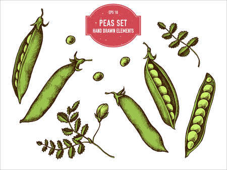 Vector collection of hand drawn colored  peas