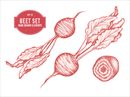 Vector collection of hand drawn pastel beet stock illustration