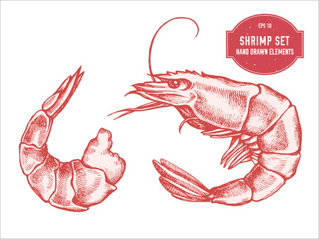 Vector collection of hand drawn pastel shrimp stock illustration