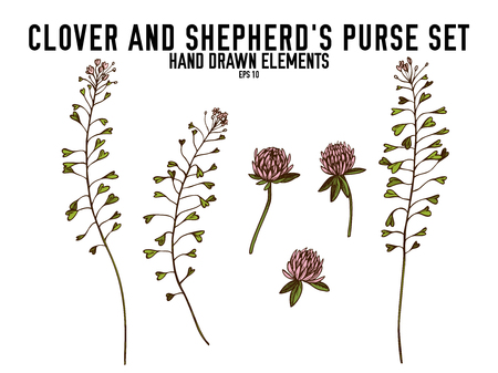 Vector collection of hand drawn colored  clover, shepherds purse