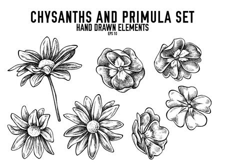 Vector collection of hand drawn black and white chrysanths, primula stock illustration