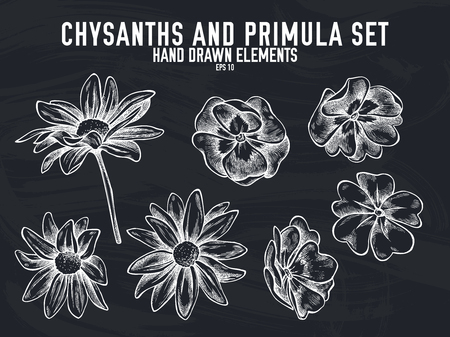 Vector collection of hand drawn chalk chrysanths, primula stock illustration