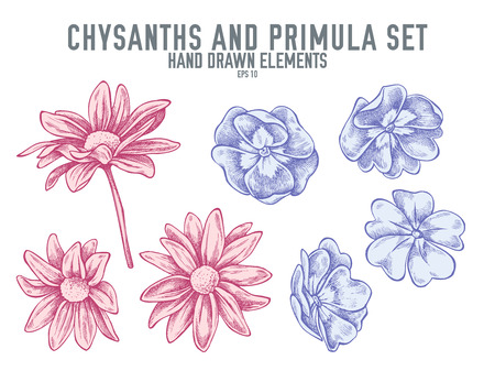Vector collection of hand drawn pastel chrysanths, primula