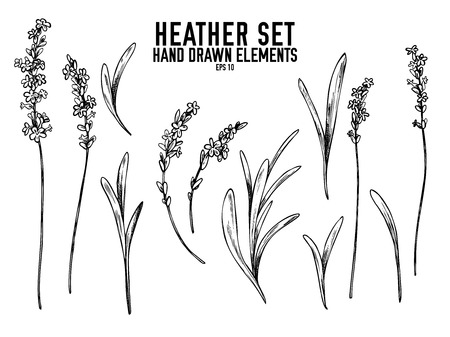 Vector collection of hand drawn black and white heather stock illustration