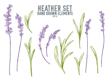 Vector collection of hand drawn pastel heather stock illustration