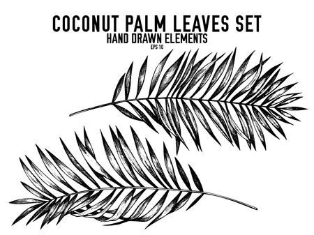 Vector collection of hand drawn black and white coconut palm leaves stock illustration
