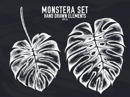 Vector collection of hand drawn chalk monstera Illustration