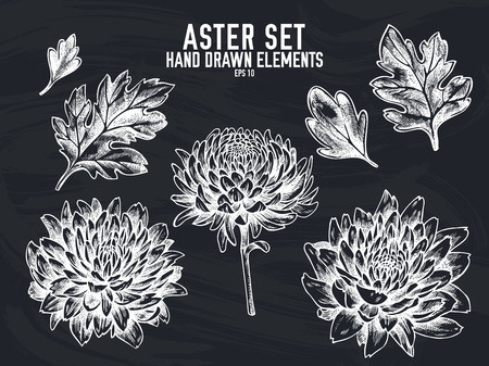 Vector collection of hand drawn chalk aster stock illustration