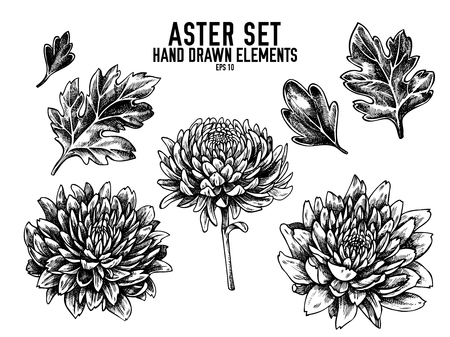 Vector collection of hand drawn black and white aster stock illustration