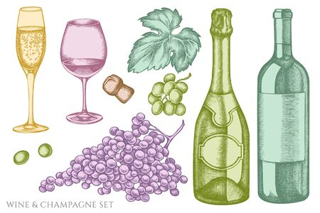 set of hand drawn pastel grapes, champagne, bottle of wine, glass of champagne, glass of wine