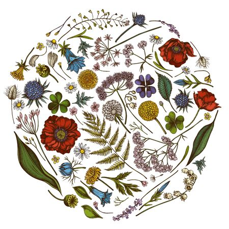 Round floral design with colored shepherds purse, heather, fern, wild garlic, clover, globethistle, gentiana, astilbe, craspedia, lagurus, black caraway, chamomile, dandelion, poppy flower, lily of the valley, valerian, angelica Stock Illustratie