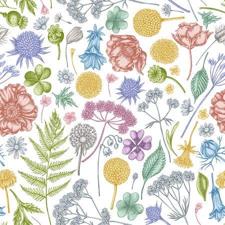 Seamless pattern with hand drawn pastel shepherds purse, heather, fern, wild garlic, clover, globethistle, gentiana, astilbe, craspedia, lagurus, black caraway, chamomile, dandelion, poppy flower, lily of the valley, valerian, angelica
