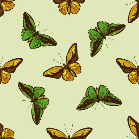 Seamless pattern with hand drawn colored ornithoptera priamus, ornithoptera croesus lydius stock illustration Illustration