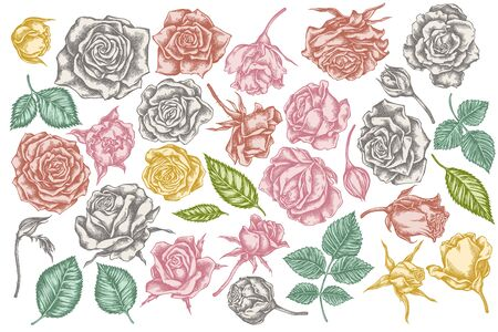 Vector set of hand drawn pastel roses stock illustration