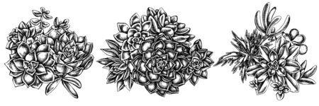 Flower bouquet of black and white succulent echeveria, succulent echeveria, succulent stock illustration Stock Illustratie