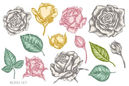 Vector set of hand drawn pastel roses