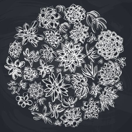 Round floral design with chalk succulent echeveria, succulent echeveria, succulent stock illustration Stock Illustratie