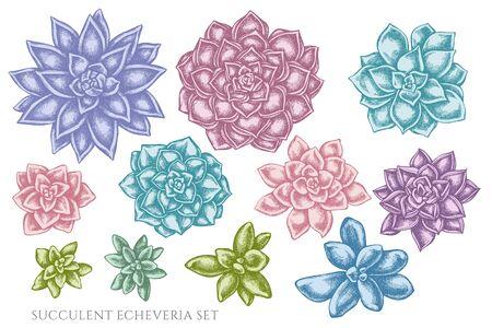 Vector set of hand drawn pastel succulent echeveria