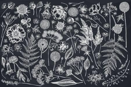 Vector set of hand drawn chalk shepherds purse, heather, fern, wild garlic, clover, globethistle, gentiana, astilbe, craspedia, lagurus, black caraway, chamomile, dandelion, poppy flower, lily of the valley, valerian, angelica stock illustration