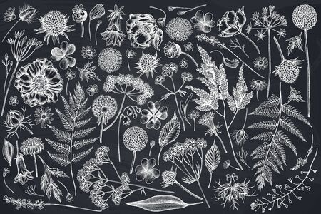 Vector set of hand drawn chalk shepherd's purse, heather, fern, wild garlic, clover, globethistle, gentiana, astilbe, craspedia, lagurus, black caraway, chamomile, dandelion, poppy flower, lily of the valley, valerian, angelica stock illustration Stock Illustratie