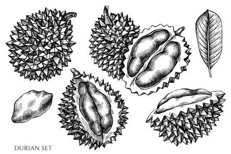 Vector set of hand drawn black and white durian Vetores