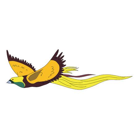 birds of paradise: birds of Paradise Illustration