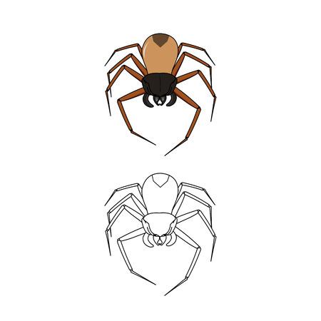 illustration: spider illustration