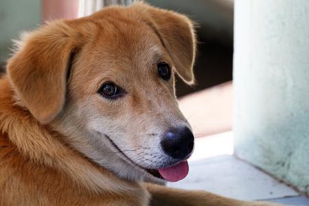 buddies: dog