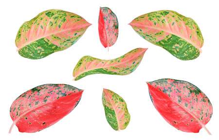 poppet: Colorful leaves texture isolated on white background