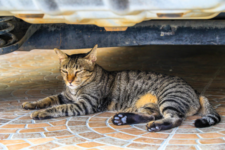 The cat relaxing on floor under car
