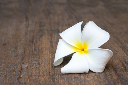 plumeria flowers on wooden background,(flower) Stock Photo