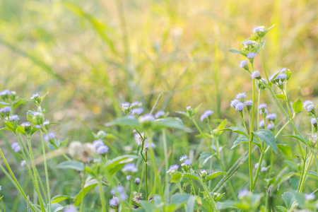 Forest meadow with wild grasses,Macro image with small depth of field,Blur background