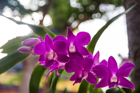 a branch of orchid in the garden,Beautiful orchid blooming on thee Stock Photo