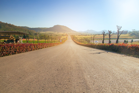 Travel road on summer Country side,Road with trees beside Concept  Stock Photo