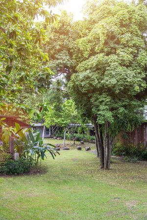 Beautiful tree on corner of the small garden,decoration gardening and landscaping Stockfoto