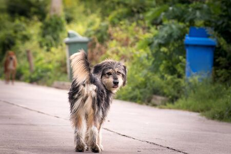 Vagrant dog standing outside watching staring at camera. The dog looking at photographer, Stray dog, Homeless dog