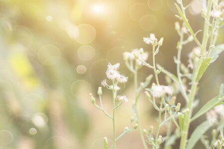 Prairie d'herbe de fleurs de forêt avec des herbes sauvages, image macro avec une faible profondeur de champ, arrière-plan flou Banque d'images