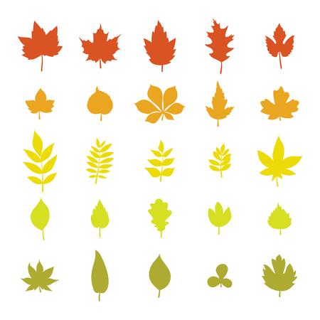 Conjunto de hojas de otoño de colores. La recolección de hojas aisladas sobre fondo blanco. ilustración vectorial