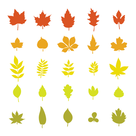 fall trees: Set of colorful autumn leaves. Leaf collection isolated on white background. Vector illustration