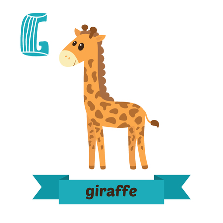 g giraffe: Giraffe. G letter. Cute children animal alphabet in vector. Funny cartoon animals. Vector illustration