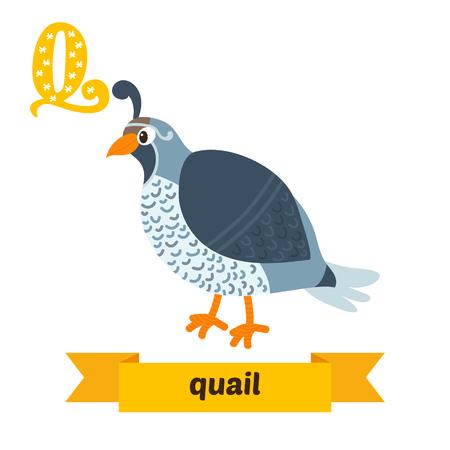 Quail. Q letter. Cute children animal alphabet in vector. Funny cartoon animals. Vector illustration