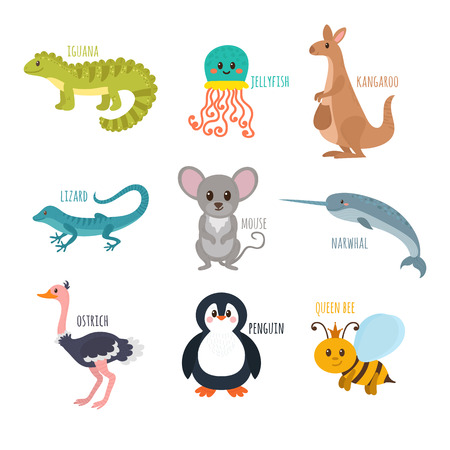 queen bee: ABC. Cute zoo alphabet in vector. Funny cartoon animals. Iguana, jellyfish, kangaroo, lizard, mouse, narwhal, ostrich, penguin, queen bee. Vector illustration