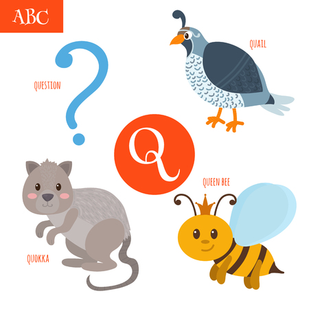 abeja reina: Letra Q. Alfabeto de la historieta para los ni�os. Codornices, pregunta, abeja reina, quokka. ilustraci�n vectorial