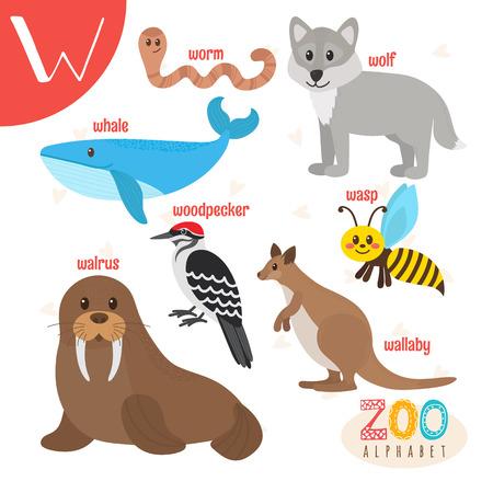 Letter W. Cute animals.  Funny cartoon animals  ABC book. illustration